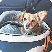 Adopt A Pet :: Airabell - Orange, CA