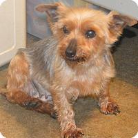 Adopt A Pet :: Evonne - Prole, IA