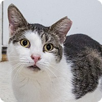 Adopt A Pet :: Franklin - Elmwood Park, NJ