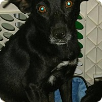 Adopt A Pet :: Mary Ann - Sacramento, CA