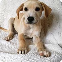 Adopt A Pet :: Mack (MD-Kelly) - Newark, DE