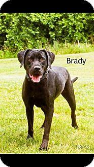 Labrador Retriever Mix Dog for adoption in Cedar Rapids, Iowa - Brady