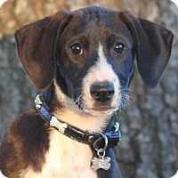 Adopt A Pet :: Whitney - Cedartown, GA