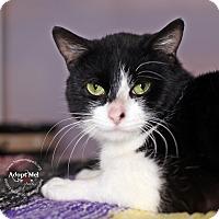 Adopt A Pet :: Sal - Lyons, NY