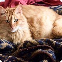 Adopt A Pet :: Cayenne - Nolensville, TN