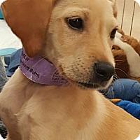Adopt A Pet :: Spencer/Adoption PENDING - Hillside, IL