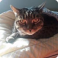 Adopt A Pet :: AlexCP - Carlisle, PA