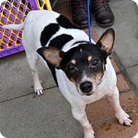Adopt A Pet :: Clarence - Madison, AL