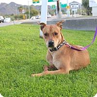 Adopt A Pet :: ASPEN - Phoenix, AZ