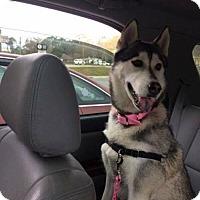 Adopt A Pet :: IZZY - Powder Springs, GA