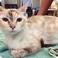 Adopt A Pet :: Vashti - Byron Center, MI