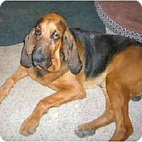 Adopt A Pet :: Reggie - Phoenix, AZ