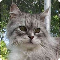 Adopt A Pet :: Andromeda Queen of the Galaxy - Davis, CA