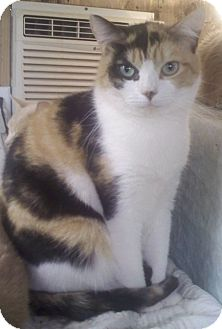 Calico Cat for adoption in Bronx, New York - Eve