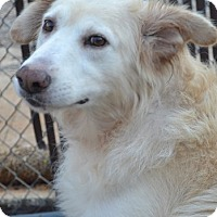 Adopt A Pet :: Ty - Windam, NH