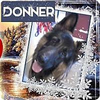 Adopt A Pet :: DONNER - Red Bluff, CA