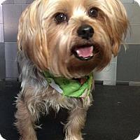 Adopt A Pet :: Vermont - McKinney, TX