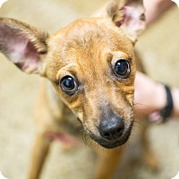 Adopt A Pet :: Max - Cranston, RI