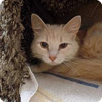 Adopt A Pet :: Marla - Hawk Point, MO