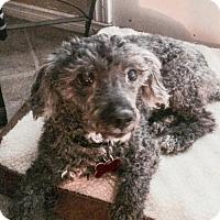 Adopt A Pet :: Benjamin 3228 - Toronto, ON