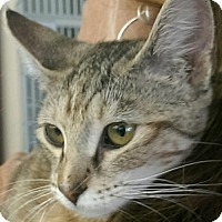 Adopt A Pet :: Sweetie Pie Dĺ - Orlando, FL