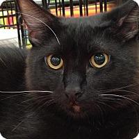 Adopt A Pet :: Abbott - Lakewood, CA