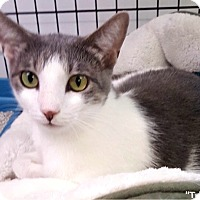 Adopt A Pet :: Tricia - Key Largo, FL