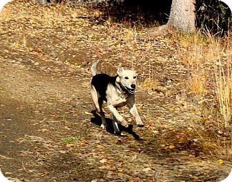 Husky Mix Dog for adoption in North Pole, Alaska - Yeta