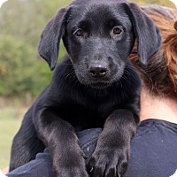 Adopt A Pet :: Bayou - Glastonbury, CT