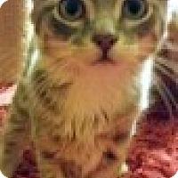 Adopt A Pet :: Jennifer - McHenry, IL