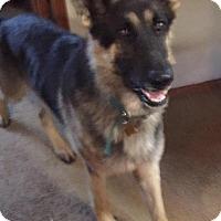 Adopt A Pet :: Knight - Racine, WI