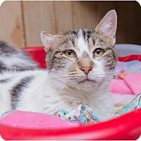 Adopt A Pet :: BC - Corinne, UT