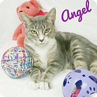 Adopt A Pet :: Angel - Kendallville, IN