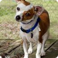 Adopt A Pet :: HARVEY - Tomball, TX