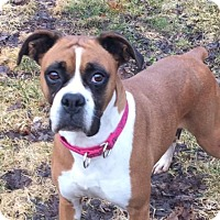 Adopt A Pet :: Baby - Woodbury, MN