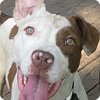 Adopt A Pet :: Patch - Jacksonville, FL