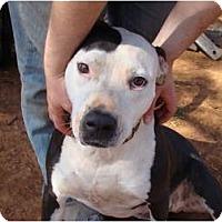 Adopt A Pet :: Daisy - Blanchard, OK