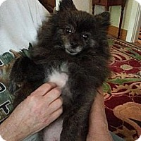 Adopt A Pet :: Gina - Hubertus, WI
