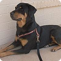 Adopt A Pet :: Baby - Only $75 adoption fee! - Litchfield Park, AZ