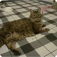 Adopt A Pet :: Tomasina - Los Angeles, CA
