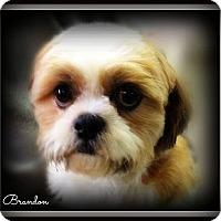 Adopt A Pet :: Brandon - Pascagoula, MS