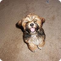 Adopt A Pet :: Bubba 2 - Katy, TX