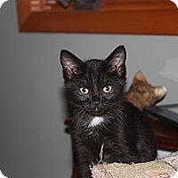 Adopt A Pet :: Chevy (LE) - Little Falls, NJ