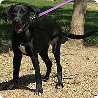 Adopt A Pet :: Chrissie - Spring, TX