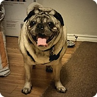 Adopt A Pet :: Mako - Austin, TX