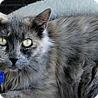 Adopt A Pet :: Princess - Temecula, CA