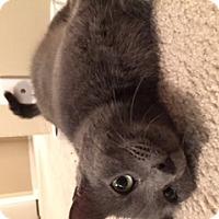 Adopt A Pet :: Misti - Syracuse, NY