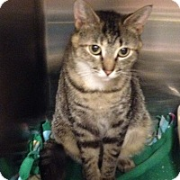 Adopt A Pet :: Mylie - Muncie, IN