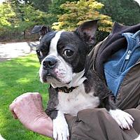 Adopt A Pet :: Cookie - Salem, OR