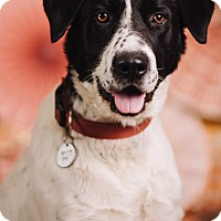 Adopt A Pet :: Kenny - Portland, OR